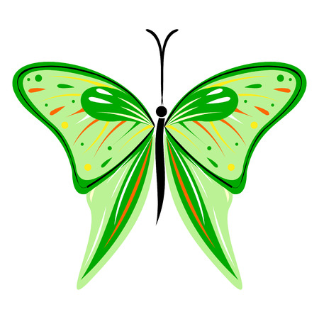 butterfly isolated: Vector illustration of insect, green butterfly, isolated on the white background