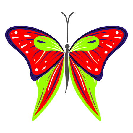 butterfly isolated: Vector illustration of insect, colorful red and green butterfly, isolated on the white background