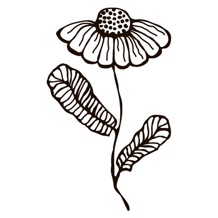 inc: Vector illustration of hand drawn flower with leaves isolated on the white background. Inc drawing