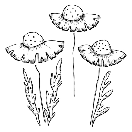 stroking: Set of vector illustrations of flowers. Dandelions with leaves isolated on the white background. Hand drawn contour lines and strokes.