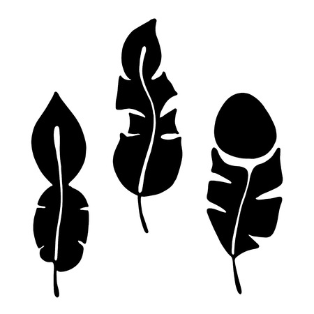 feathering: Vector hand drawn illustration, decorative ornamental stylized feather. Black and white graphic illustration isolated on the white background. Hand drawing silhouette. Illustration