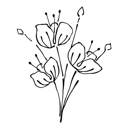 stroking: Vector floral illustration.Branch with flowers with leaves isolated on the white background. Hand drawn contour lines and strokes. Graphic vector illustration Illustration