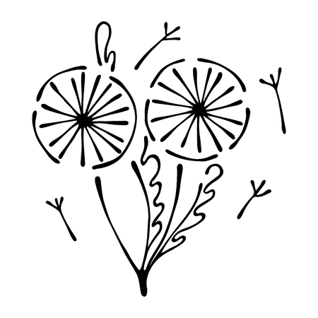 Vector floral illustration of dandelions with leaves, decorative elements isolated on the white background. Hand drawn contour lines and strokes. Doodle style, graphic vector illustration of flowers