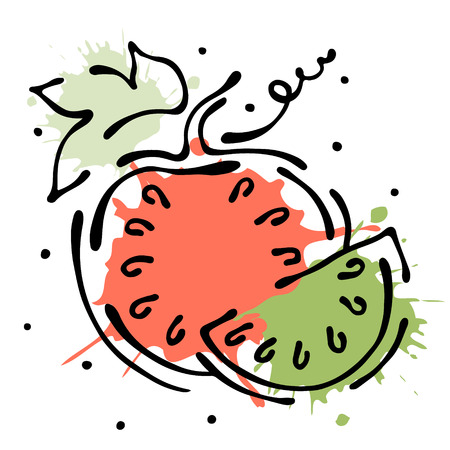 stroking: Vector fruits illustration. Watermelon with leaves, decorative elements isolated on the white background. Hand drawn contour lines and strokes. Doodle style, graphic vector illustration