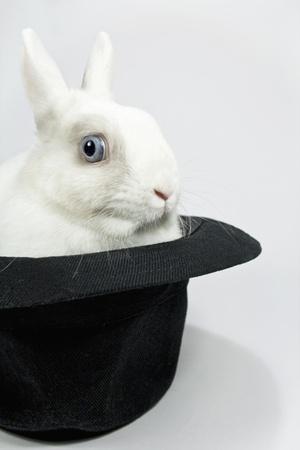 little white rabbit in the black hat photo