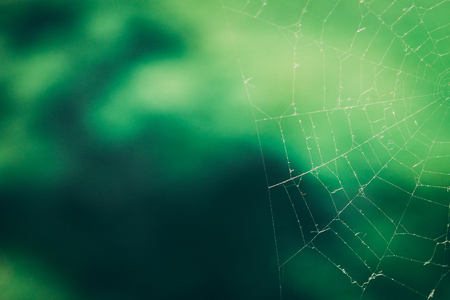 spider web on blurred green background. copy space