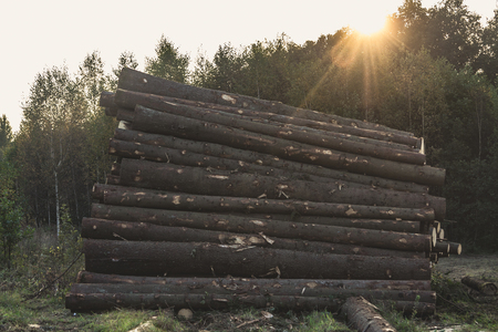 a lot of wooden logs lying in the forest horizontally. the sun shines through the trees Stock Photo