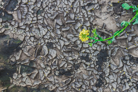 Green plant on the background of the texture of the dried up cracked earth in the summer. The concept of drought and the absence of rain.