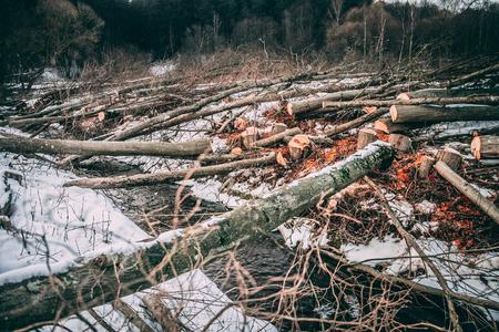Folded trees lie in a stream in winter. Orange sawdust and shavi Фото со стока
