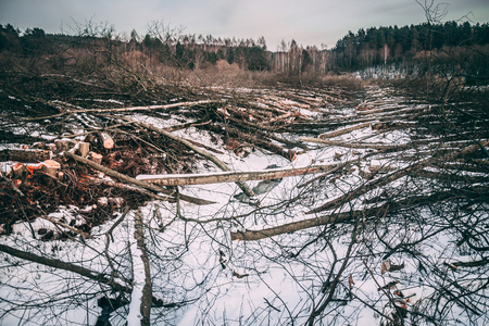 Folded trees lie on the field in the snow in winter against the