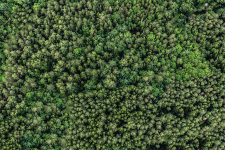 Top view of the area green forest. Nature texture Фото со стока