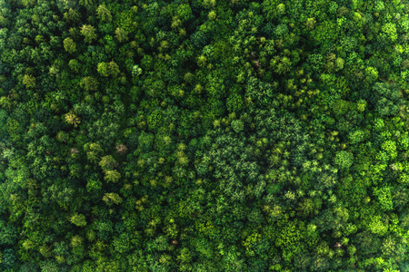 Top view of the area green forest. Nature texture 免版税图像