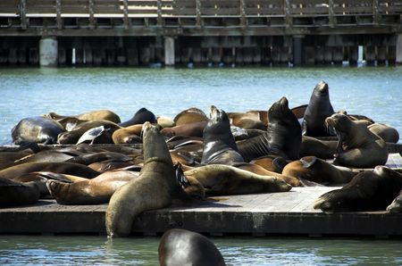 Pier 41 and sea lions on the docks at Fisherman's Wharf in San Francisco Stock Photo - 2613485