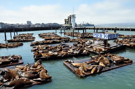 Pier 39 at the Marina at fishermans wharf in San Francisco California