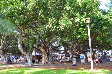 The famous Banyan Tree in the centre of Lahaina, Maui is a single tree covering a city block  Vendors set up their wares to sell items for tourists beneath its branches daily