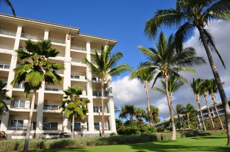 Palm trees on Maui along the Kaanapli beach front walking path with luxury hotel and condos in view