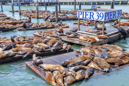 Sea lions on pier 39 in San Francisco, USA.