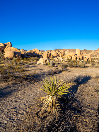 ecosystems: Landscape in Joshua Tree National Park, California, USA, where the Mojave and Colorado desert ecosystems meet. Stock Photo