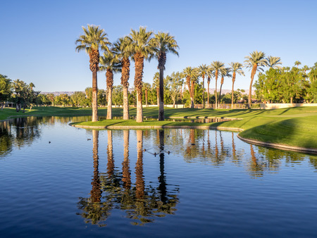 water feature: Palm trees reflecting in water feature on a golf course at a resort in Palm Desert, California.