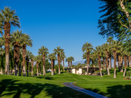 golf of california: Palm trees on a golf course at a resort in Palm Desert, California. Stock Photo