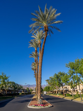 palm desert: Palm trees on a road at a resort in Palm Desert, California. Stock Photo