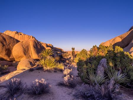 jumbo: Jumbo Rocks in Joshua Tree National Park, California, USA, where the Mojave and Colorado desert ecosystems meet.