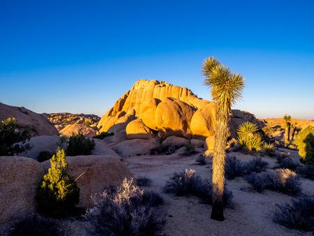 preserve: Jumbo Rocks in Joshua Tree National Park, California, USA, where the Mojave and Colorado desert ecosystems meet.
