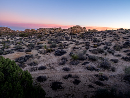 ecosystems: Desert landscape as sunset in Joshua Tree National Park, California, USA, where the Mojave and Colorado desert ecosystems meet.