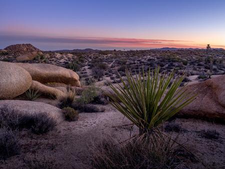 Desert landscape as sunset in Joshua Tree National Park, California, USA, where the Mojave and Colorado desert ecosystems meet.