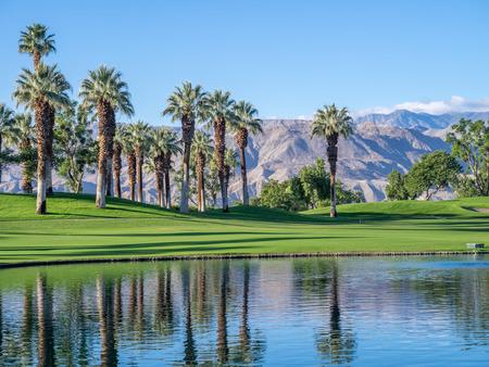 Palmy, odzwierciedlając w wodzie na polu golfowym w Palm Desert w Kalifornii.