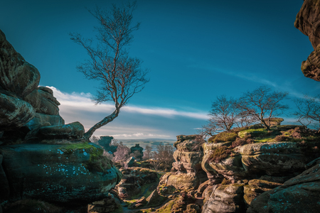 Birch Tree at Brimham Rocks. Rock Formation. Canyon. Sandstone Rocks. Trees and Rocks. Yorkshire Dales