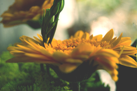 Beautiful summer specific photo. Yellow flowers in a close up shot. Stock Photo