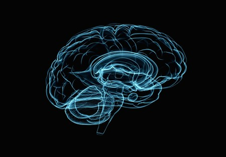 brain: Brain model xray look isolated on black background