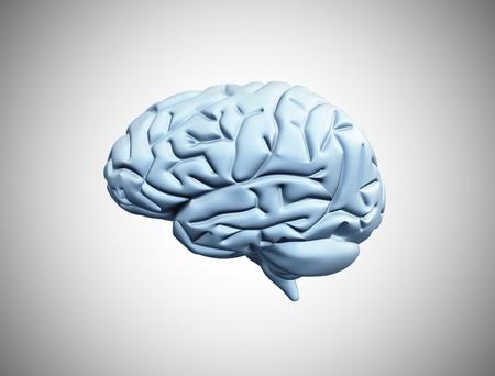 mentality: Human brain 3d illustration  Stock Photo