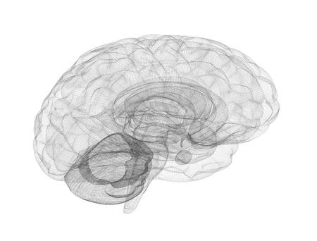 cerebro blanco y negro: Modelo de estructura met�lica de cerebro