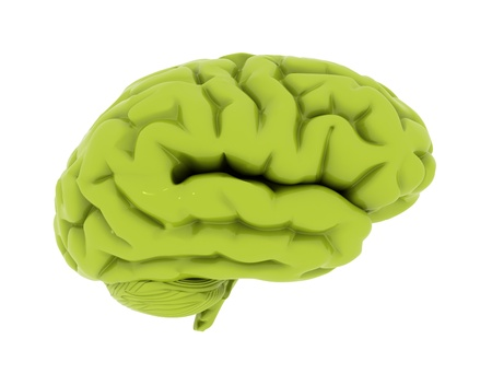 Green brain sisolated on white background  photo