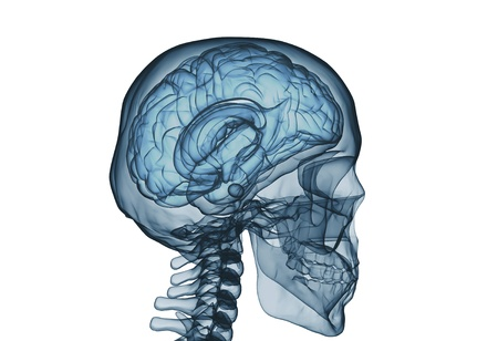 Brain and skull x ray image isolated on white  Stock Photo