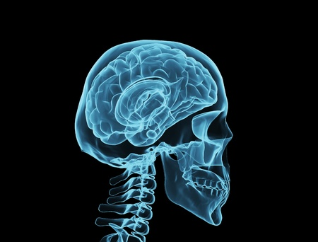 skeleton x ray: Brain xray  Stock Photo
