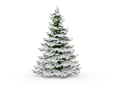 frost covered: christmas tree on a white background