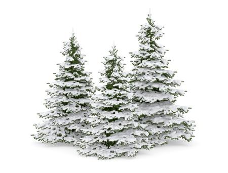 evergreen branch: Thre �rbol de Navidad y la nieve
