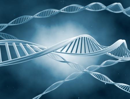 gene on a chromosome: DNA