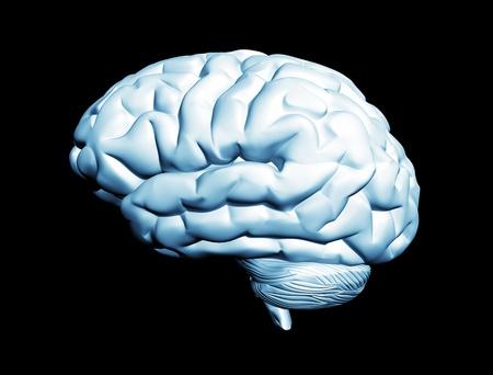 Brain isolated  photo