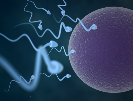 cells and egg Stock Photo - 13272225