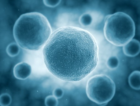 Cells under a microscope