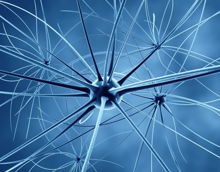 The brain neurons and nervous system Stock Photo - 18429677
