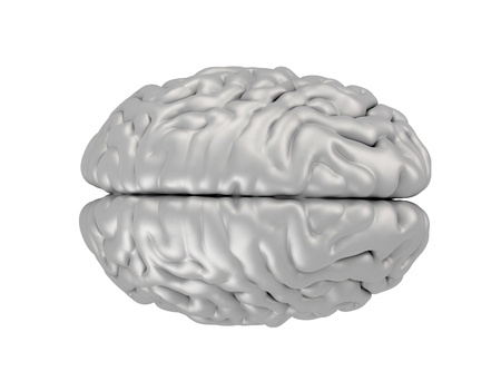 Human brain isolated on white  Stock Photo - 18500100