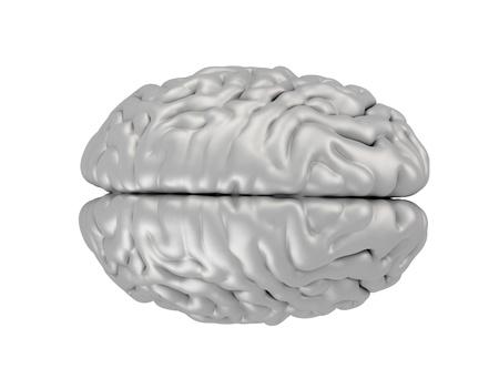 Human brain isolated on white Stock Photo - 18500100