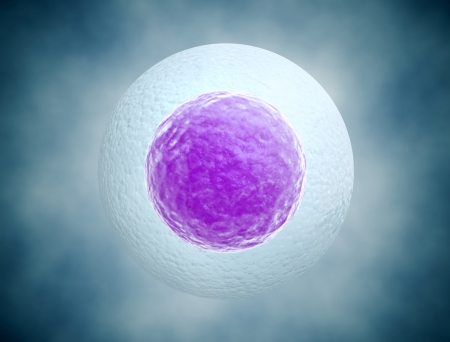 Human egg cell background photo