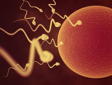 esperma: espermatozoide y el �vulo celular Foto de archivo