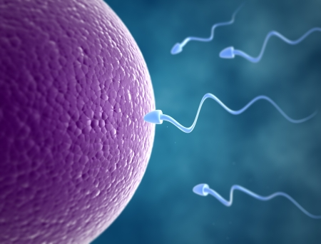 Sperm cells race to the egg Stock Photo - 18429662